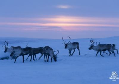 gallery-nature-utsjoki-holiday-village-valle-lapland-003