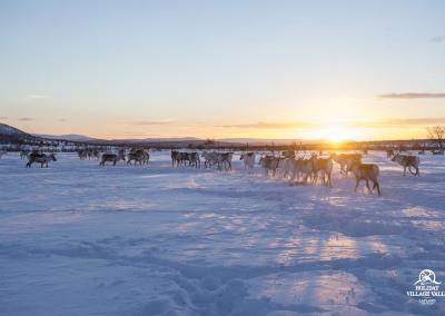 gallery-nature-utsjoki-holiday-village-valle-lapland-005