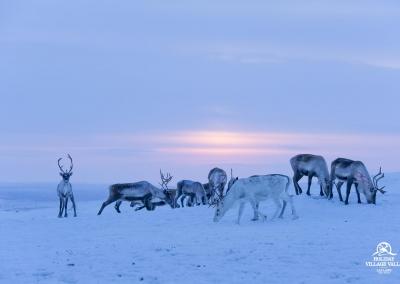 gallery-nature-utsjoki-holiday-village-valle-lapland-010