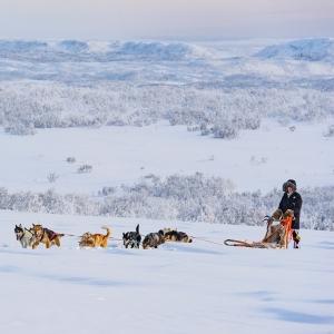 Holiday Village Valle Lomakylä Valle Utsjoki talviaktiviteetit koiravaljakkoajelu
