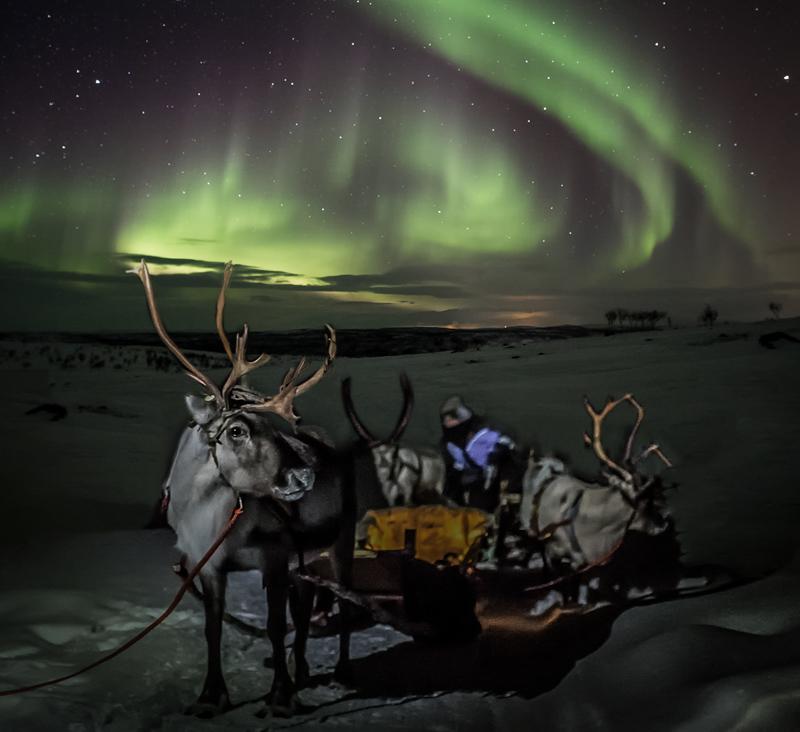 Aurora reindeer safari
