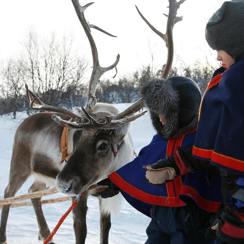 Meet the Reindeers